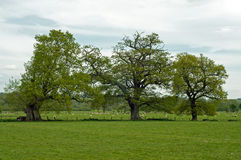 Agricultural scenery in the English countryside. A view of a lovely woodland, fields and trees and shrubbery in the Springtime of the English countryside Stock Images