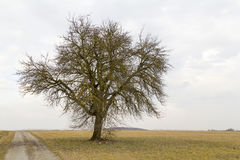 Agricultural  scenery with lonely tree Royalty Free Stock Photography