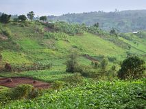 Agricultural scenery near Rwenzori Mountains Stock Photo