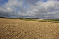 Agricultural scenery Stock Images