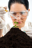 Agricultural scientist testing in laboratory. Agricultural woman scientist testing in laboratory ,she using a pipette with liquid on a plant in soil,check also Royalty Free Stock Photo