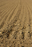 Agricultural soil Royalty Free Stock Photo