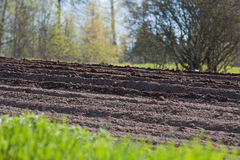 Agricultural soil in springtime Stock Photos