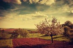 Agricultural spring vintage landscape Stock Images