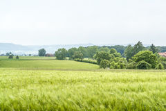 Agricultural springtime scenery Stock Photos