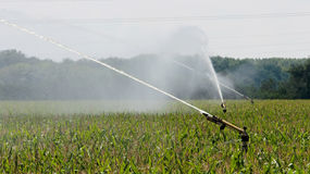 Agricultural Sprinkler Watering Cornfield Royalty Free Stock Photography