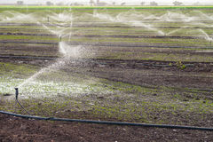 Agricultural sprinklers Royalty Free Stock Photo