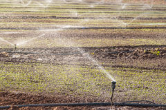 Agricultural sprinklers Royalty Free Stock Images