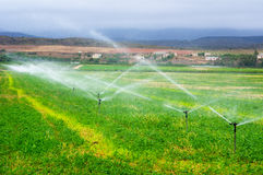 Agricultural sprinklers watering in a field,. Sprinkler installation irrigating a field of maize in South Africa Royalty Free Stock Photos