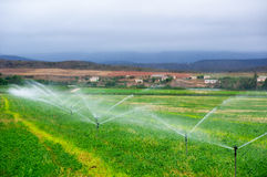 Agricultural sprinklers watering in a field,. Sprinkler installation irrigating a field of maize in South Africa Stock Images