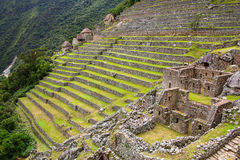 Agricultural stone terraces at  Machu Picchu in Peru Royalty Free Stock Image