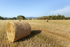 Agricultural summer  landscape Royalty Free Stock Photo