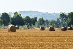 Agricultural summer  landscape Stock Photos