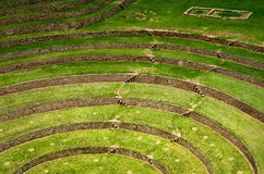 Agricultural terraces in Moray, Cusco, Peru Stock Image