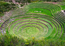 Agricultural terraces in Moray, Peru Royalty Free Stock Photography