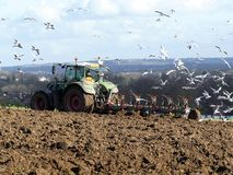 Agricultural tractor plowing field with gulls in attendance stock images