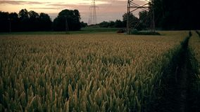 Agricultural tractor spaying wheat field near high voltage electricity poles stock footage