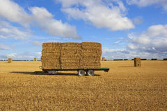 Agricultural trailer with straw bales at harvest time Royalty Free Stock Photo