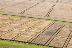 Agricultural trial fields Royalty Free Stock Images