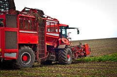 Agricultural vehicle harvesting sugar beet Royalty Free Stock Images