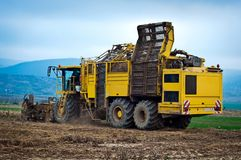 Agricultural vehicle harvesting sugar beet Stock Image