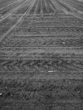 Agricultural view. Artistic look in black and white. Royalty Free Stock Photo