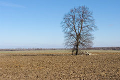 Agricultural view on plowed field Stock Photos
