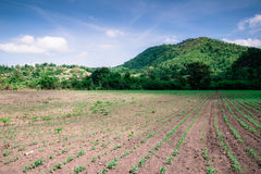 Agricultural views Stock Photos