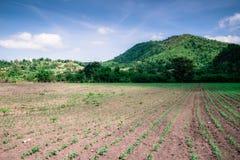 Agricultural views Stock Photos