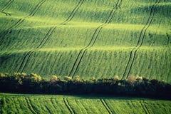 Agricultural vintage landscape Stock Images
