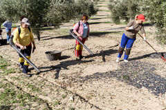 Agricultural women during the olive compilation campaign, glass- Royalty Free Stock Photography