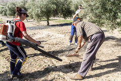 Agricultural women during the olive compilation campaign Stock Photos