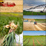 Agricultural work collection Royalty Free Stock Photo