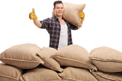 Agricultural worker behind sack pile giving a thumb up Royalty Free Stock Photo