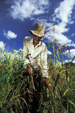 Agricultural worker, Brazil. Agricultural worker in the Brazilian sertão. State of Bahia, Brazil Stock Image