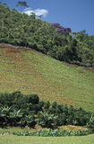 Agricultural worker and deforestation in Brazil. Workers in cultivated fields in the state of Espirito Santo, south-eastern Brazil. The region is covered by a Stock Photography