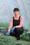Agricultural worker in a greenhouse with tomato pl Stock Photos