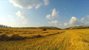 Agricultural works with combine harvester in the field stock video footage