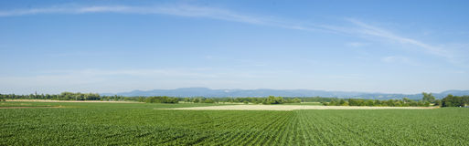 Agriculture. In the Ortenau - Rhine Valley. Corn fields Stock Photos