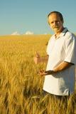 Agriculture. Succes concept: farmer durum wheat field stock image