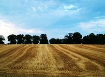 Agriculture. Fields, tree and blue sky Stock Images