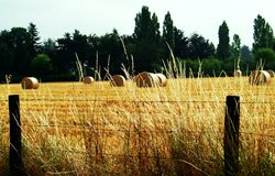 Agriculture. Hay bales in a field Royalty Free Stock Photography