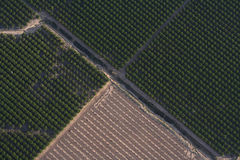 Agriculture. Overhead view of an orange tree orchard Stock Photo