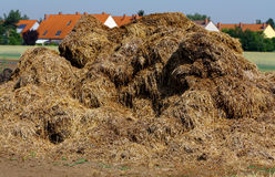 Agriculture. Purely. Stable dung in a big heap before a village as a natural fertilizer for the vegetable-growing on the field stock image