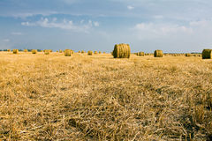 Agriculture. The bales of straw combined on an agricultural field Royalty Free Stock Photography