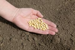 Agriculture Royalty Free Stock Image