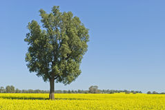 Agriculture royalty free stock photos