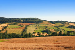 Agriculture. Landscape , view of a grain field Royalty Free Stock Image