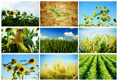 Agriculture Image stock