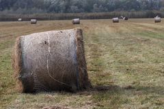 Agriculture. Photo was made in the autumn Stock Photo